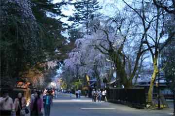 角館 武家屋敷の夜桜です。